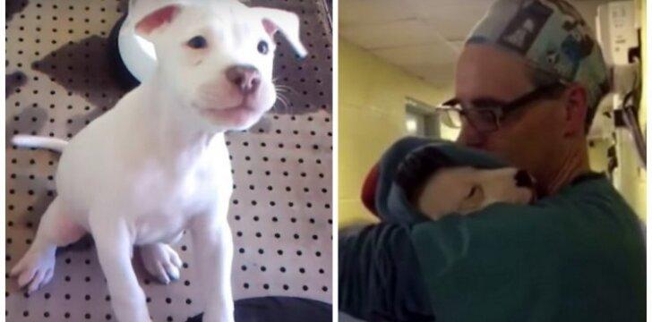 Norėdamas nuraminti mažylę, veterinaras sūpuoja ją tarsi kūdikį