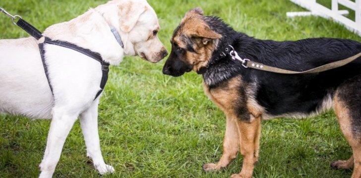 Šuns diena prie Baltojo tilto