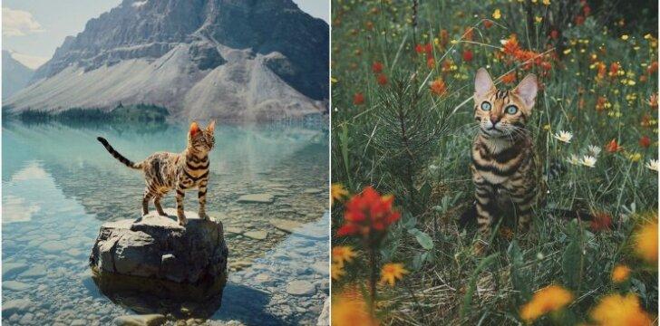Bengalijos katės Suki kelionių nuotraukos