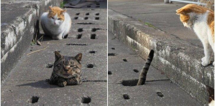 Žaidžiantys katinai