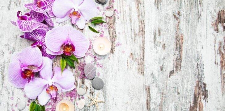 Kaip išgelbėti džiūvančią orchidėją