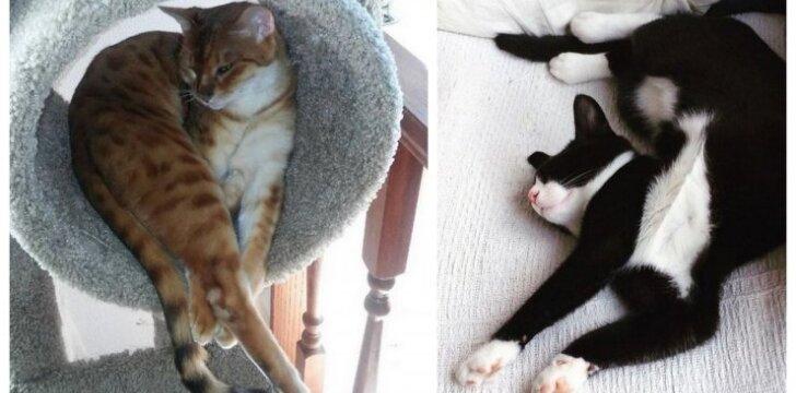 Miegančios katės