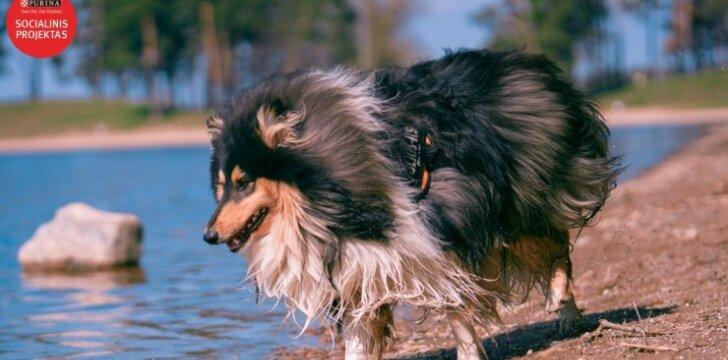 Kino industrijos išgarsinti šunys nėra skirti vaikams