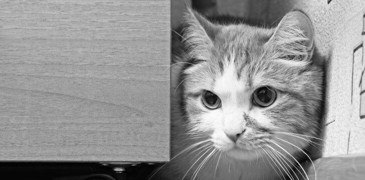Nuskriasuta katė, asociatyvi nuotrauka