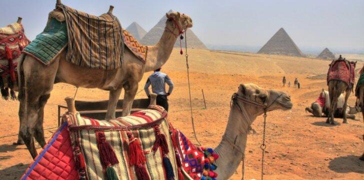 Egipto gidas