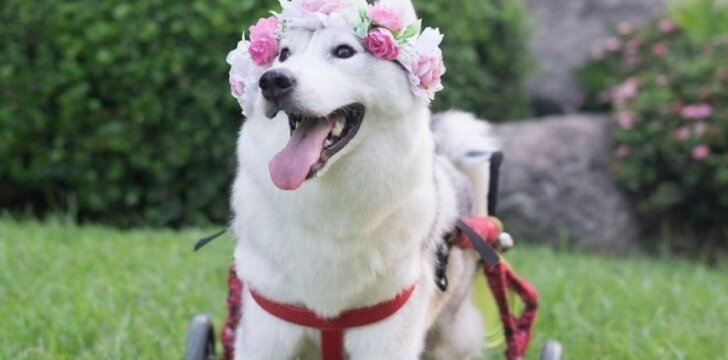 Šuo Maja