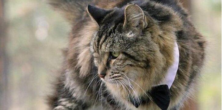 Ar matėte, kaip atrodo seniausias pasaulyje katinas?