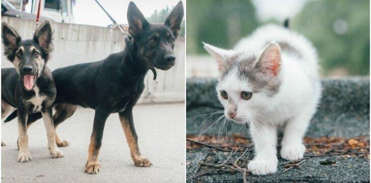 Namų ieškantys gyvūnai