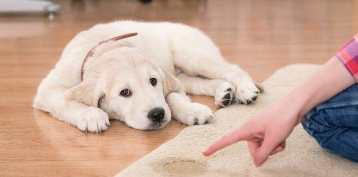 Mokome šunį švaros