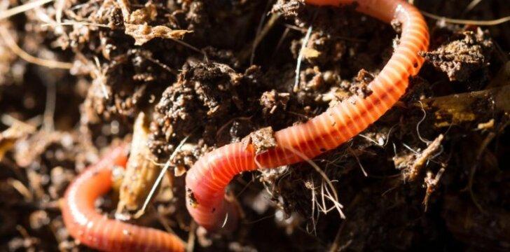 Gaminame kompostą: trys žingsniai