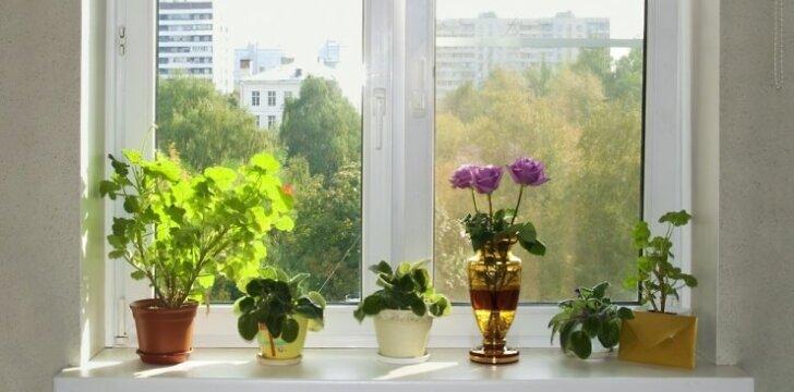 Langų dekoras vasarai: dvigubi roletai, plisuotos žaliuzės ir ryškios spalvos