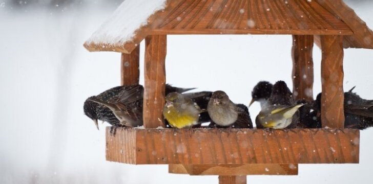 Kaip žiemą pritraukti paukščius ir gyvūnus į savo sklypą