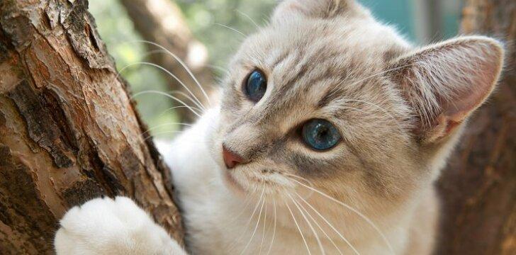 Kaip elgtis, jei katė negali išlipti iš medžio