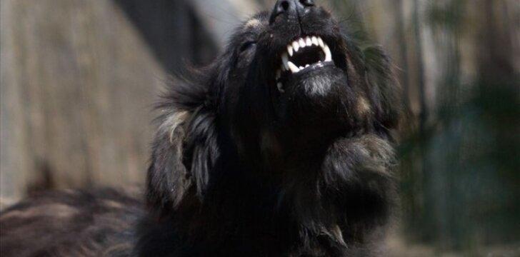 Šuo, dantys, aociatyvi nuotr.