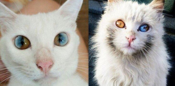 Kačių akys