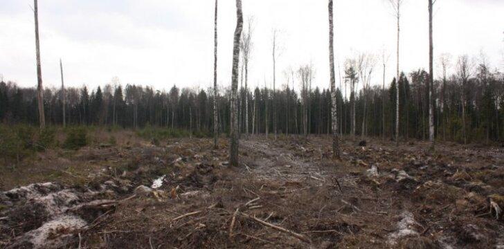 Plyni kirtimai Lietuvoje taip pat laikomi mišku