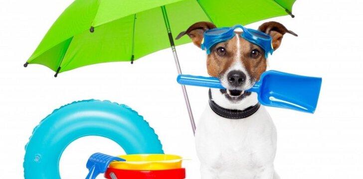 Ieškom augintinio: protingiausių ir lengviausiai dresuojamų šunų sąrašas