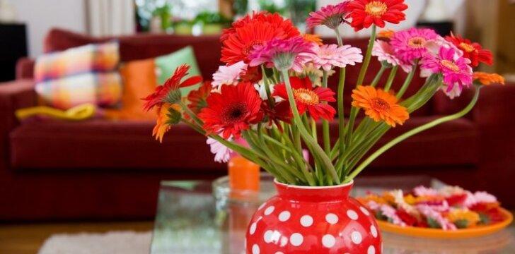 Pratęsk skintų gėlių gyvenimą