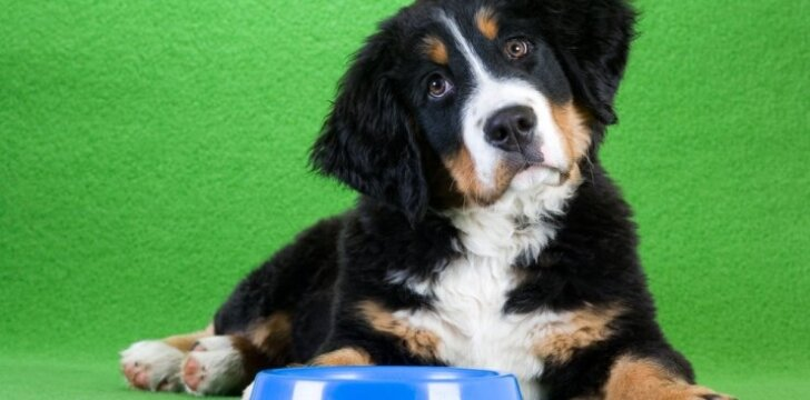 Šuo prie dubenėlio