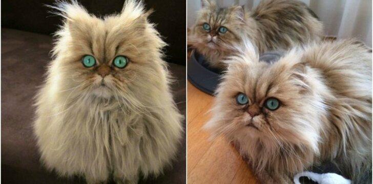 Ypatingos katytės