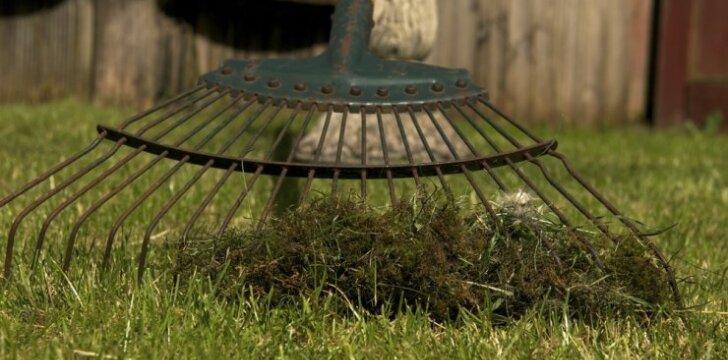 Užbėkime problemai už akių: kaip panaikinti samanas vejoje?