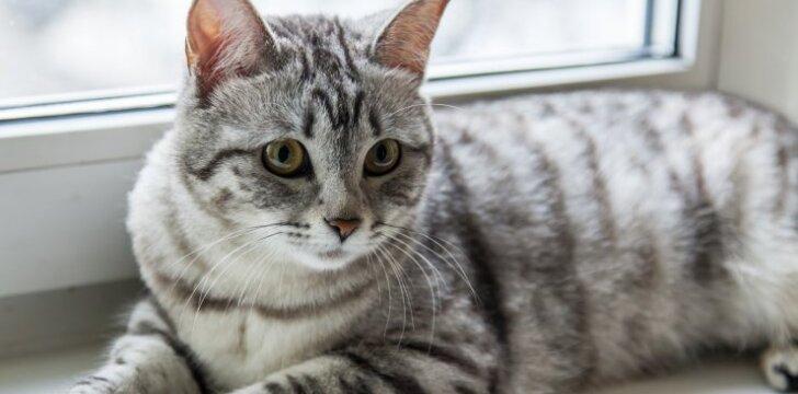 Ką daryti, jei plinka jūsų katė