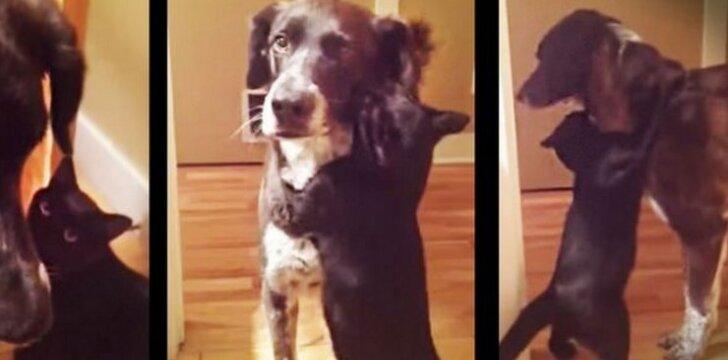 Neįtikėtina, kaip elgiasi katė, pagaliau sulaukusi sugrįžusio šuns