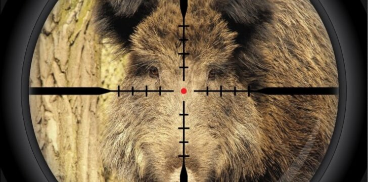 Šerno medžioklė