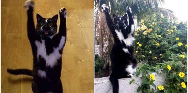 Juokinga katė
