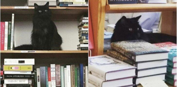Katinas Spike'as