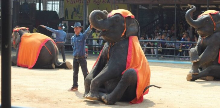 Dramblių pasirodymas Tailande