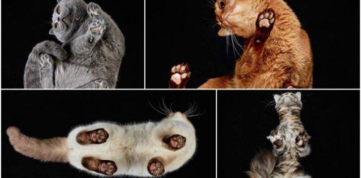 Kačių nuotraukos iš apačios