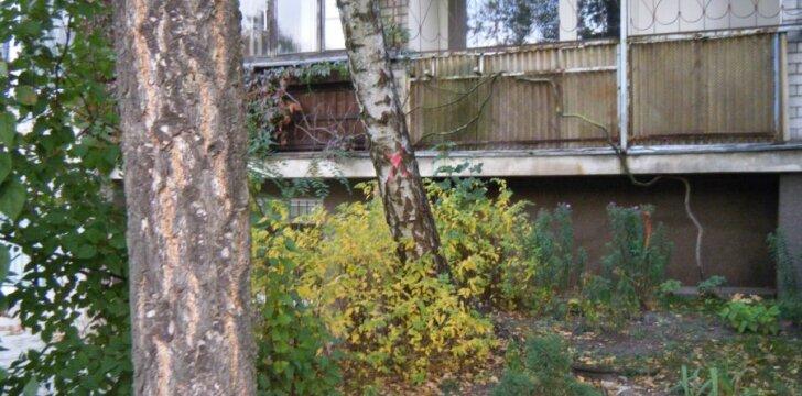 Kryžius ant mylimo medžio sujudino namo gyventojus