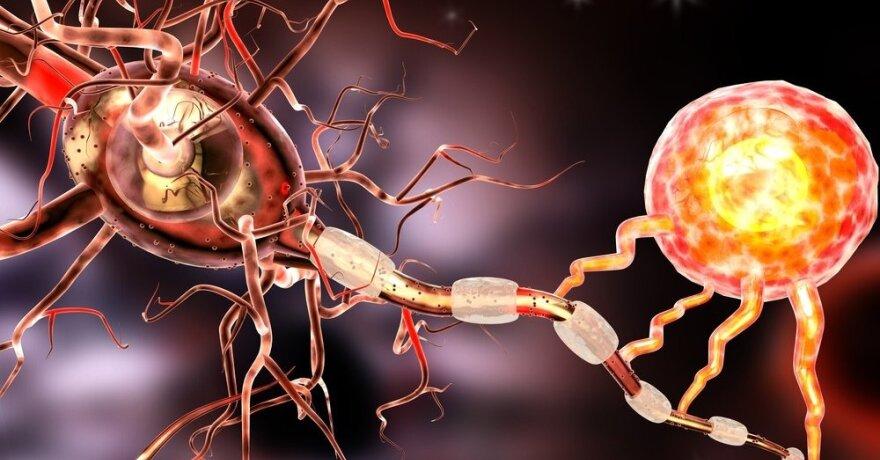 nervų prekybos sistema