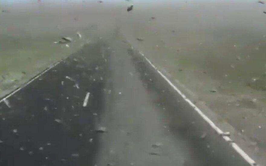 Skėrių antplūdis Dagestane