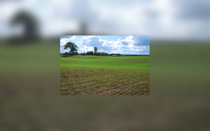 Kaimas, pasėliai, laukas, žemdirbystė