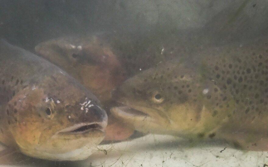 Nuo koronaviruso nukentėjęs žvejybos sektorius galės gauti paramą