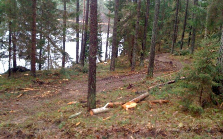 Taip Labanoro girioje esanti Aiste ežero pakrantė atrodo po kirtimų