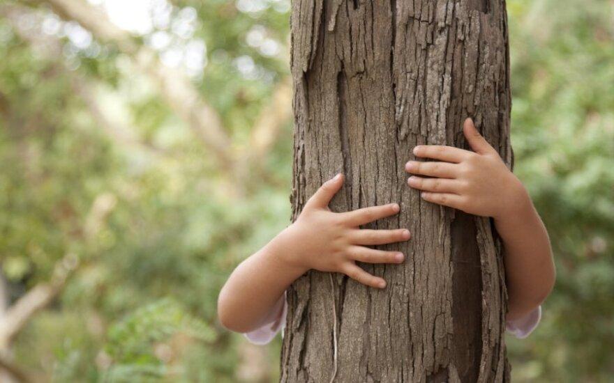 Kodėl reikia leisti vaikams lipti į medžius: mergaitės įspūdis ir patirtis