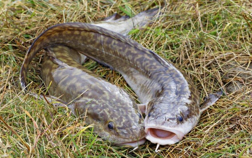 Įsigali svarbus draudimas žvejams