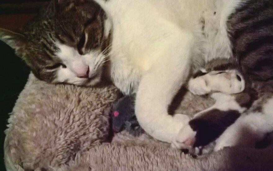 Dingusi katytė