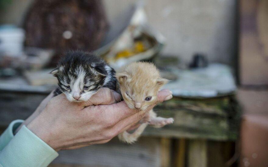 """Beglobių gyvūnų """"daugykla"""" privataus namo kiemelyje: prašo paremti"""