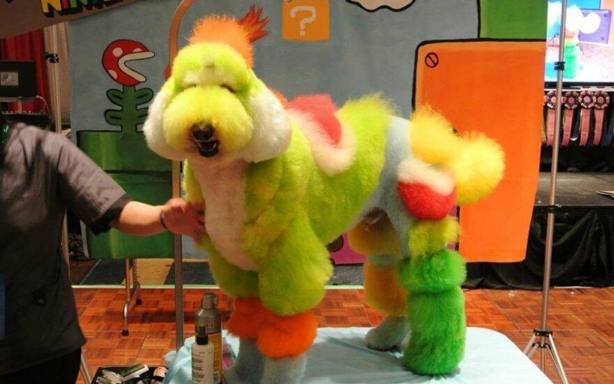 Išmargintas šuo