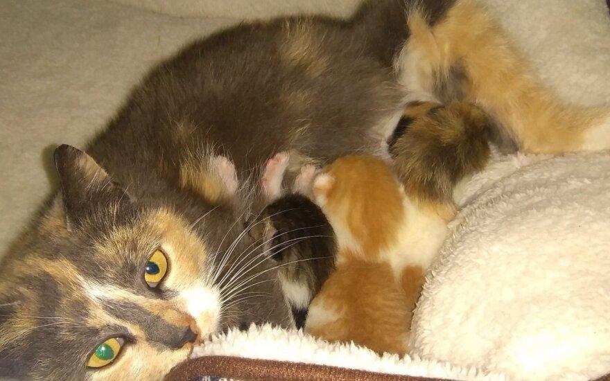 Prašo padėti išmaitinti kačių šeimynėles