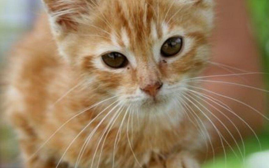 Katinėlis Laimutis