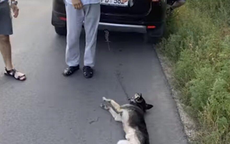 Kunigas prie automobilio pririšo šunį ir vilko gatve