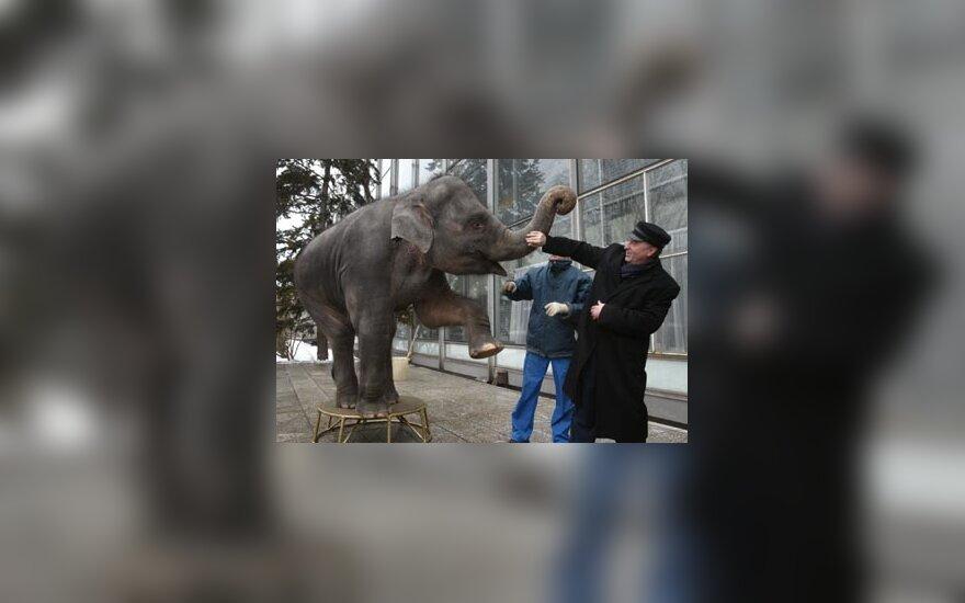 V. Žirinovskis žaidžia su drambliu per knygų mugės atidarymą Maskvoje