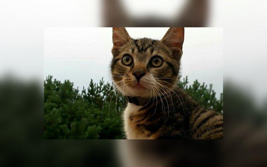 Dituvos soduose rastas katinas