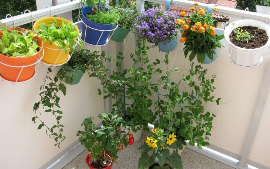 Šluojate parduotuves? Specialistai pataria: verčiau eikite sodinti daržo