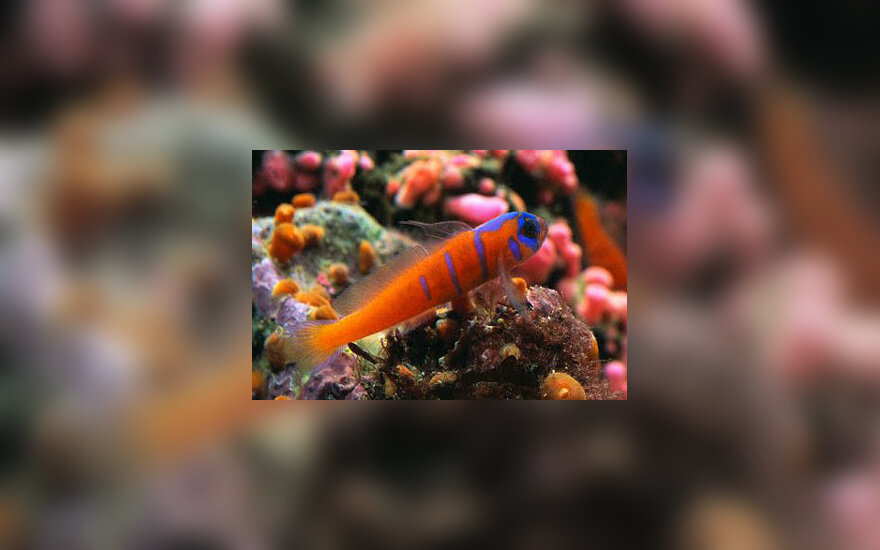 Akvariumas, žuvys
